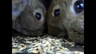 Фильм про кроликов зимой.wmv