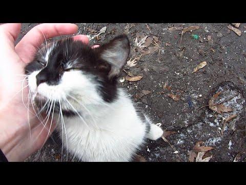 Cute cat demands petting on street
