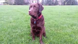 Dog Training Mississauga Seamus K9 Services