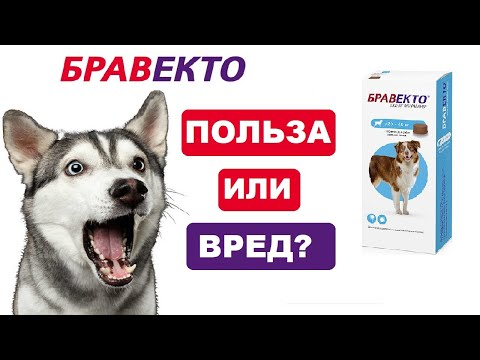 Вопрос: При какой температуре воздуха пора давать собаке Бравекто shy?