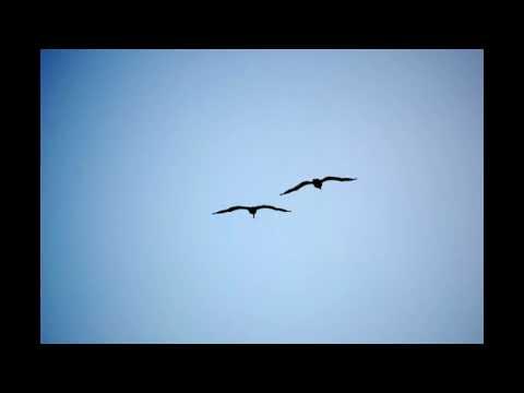 Fly Away -  Ghostt