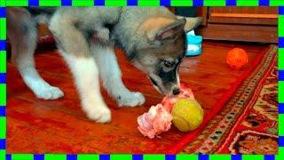 Сладкое Собачье Детство