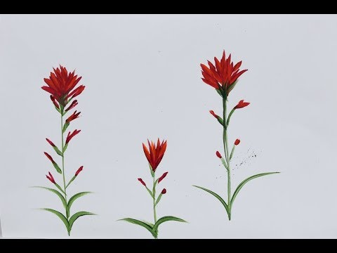 Paint Indian Paintbrush one stroke at a time