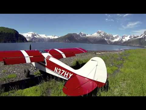 Alaska Husky Flying