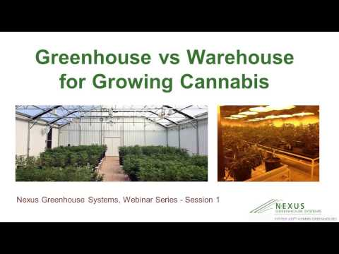 Nexus Cannabis Greenhouse vs Warehouse Growing