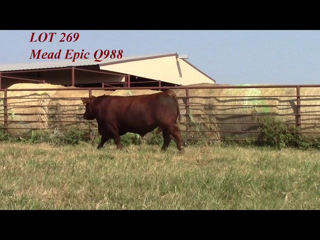 Mead Angus Lot 269
