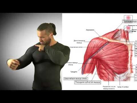 Нюансы Секреты Накачки грудных мышц Как накачать грудь