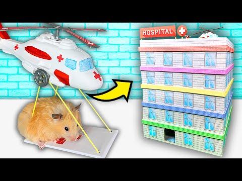 Hamster Hospital Maze  5level Maze for Hamsters Show
