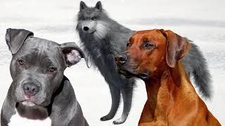 Постконфликтное поведение собак и волков. Интересные факты о животных