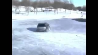 Dog driving on snow