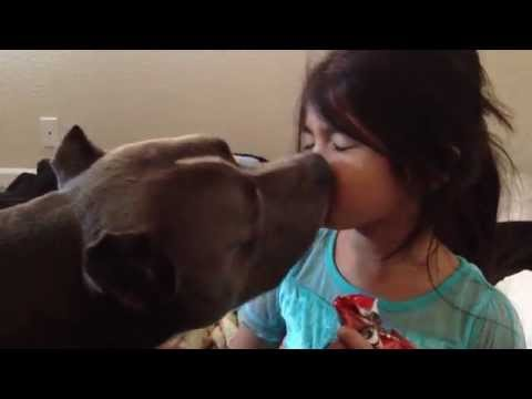 Pit bull love of affection shocks the world !!! grows trust earns loyalty !!