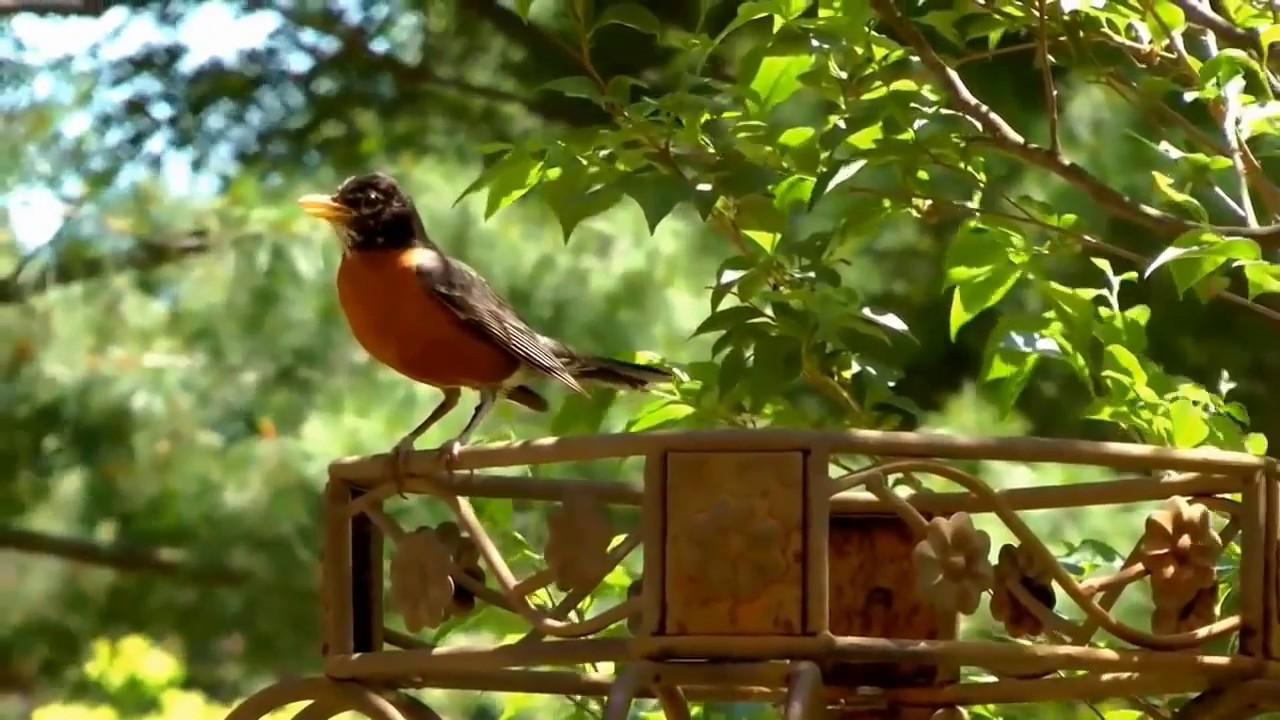 Save Birds – BuddyBits