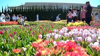 Khu du lịch Bà Nà đón nhận kỷ lục Guinness cho Lễ hội hoa tulip