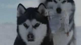 Видео про Волков