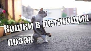 Кошки в летающих позах. Кунг-фу кошки.