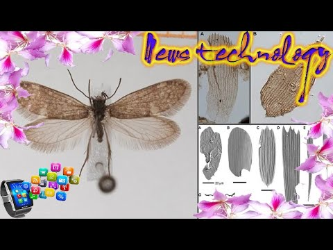 News Techcology -  Fossils show butterflies appeared on Earth before flowers