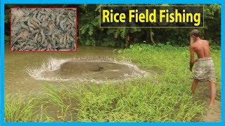 Combo Rice Field Fishing (Out Of 2) | Fish Corn