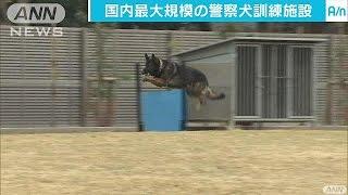 警視庁が警察犬の訓練を行うための国内最大規模の施設を東京・東大和市...