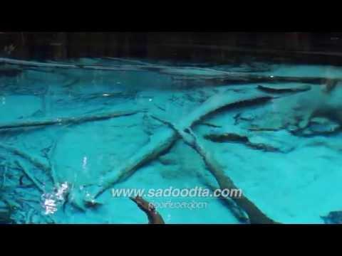 ลักษณะการผุดของน้ำ ที่บ่อน้ำผุดสระมรกตจังหวัดกระบี่