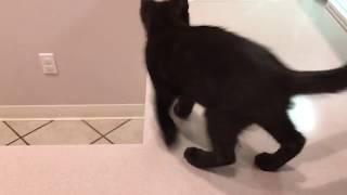 Kitten Plays in Sink