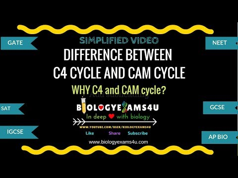 Difference between C4 Cycle and CAM Cycle (C4 plants vs CAM plants)