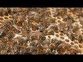 ABB UPS - DPA 250 S4 - YouTube