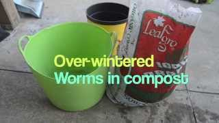 Storing Compost With Worms Over Winter - Did They Survive?