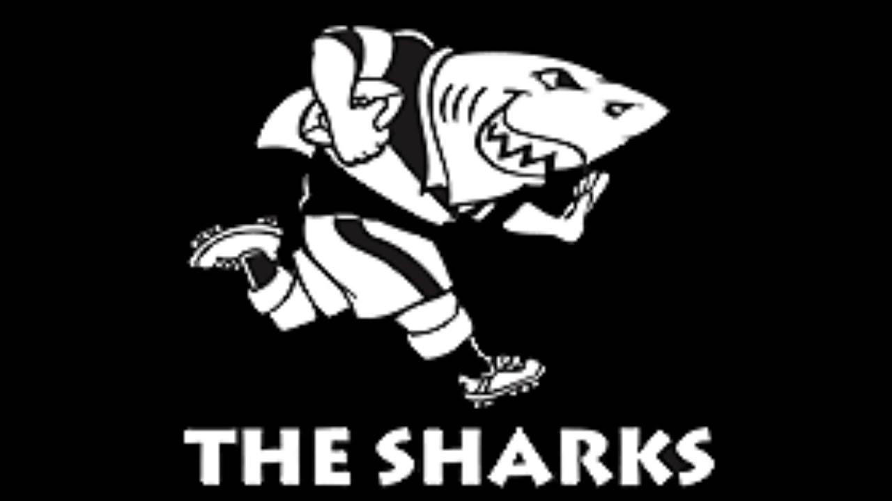 shark rugby logo