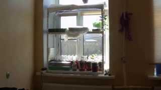 стеллаж для рассады на подоконике(как из обычного стеллажа легко сделать стеллаж для рассады., 2015-03-05T10:34:12.000Z)
