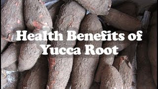 Top 8 Wonderful Health Benefits of Yucca Root