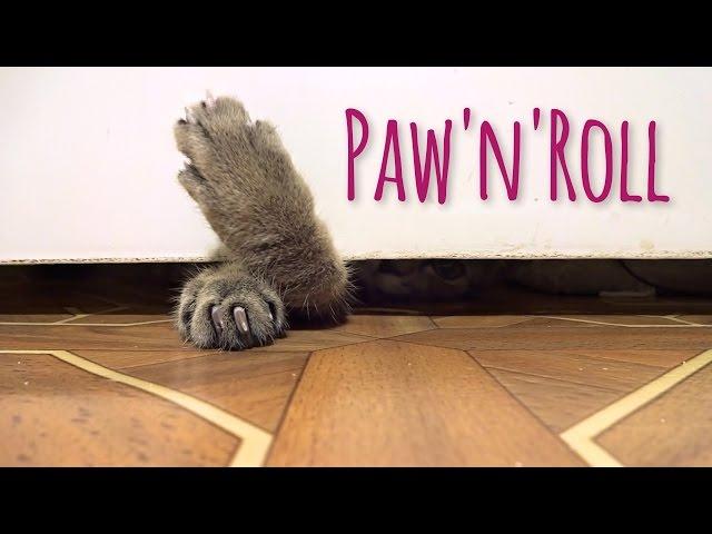 Kitten playtime: Paw'n'Roll