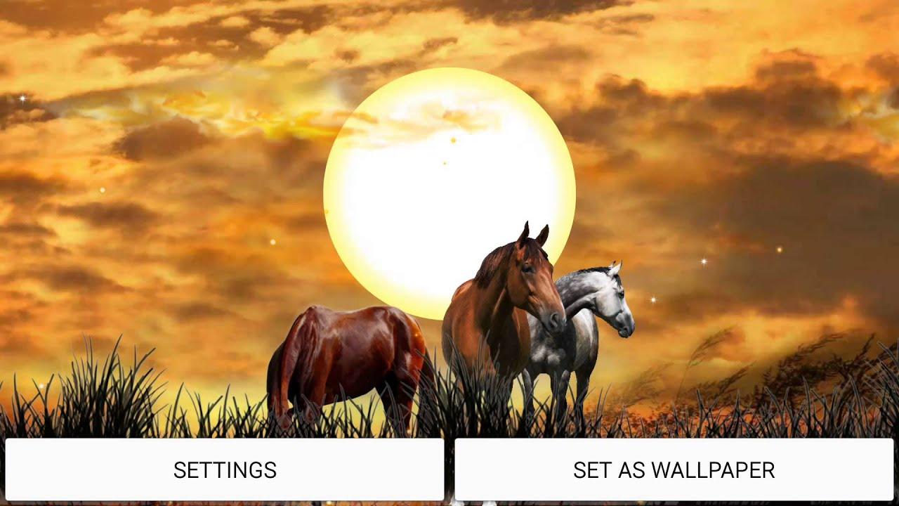 Wild horses hd live wallpaper youtube wild horses hd live wallpaper altavistaventures Image collections