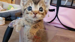 「ネズミかと思った」とても小さな子猫を保護すると…家族にとって大きな存在になる【感動】 猫なのに「マウス」という名前を与えられた子が...