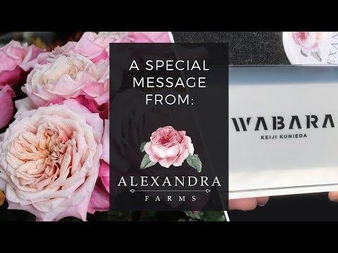 JFTV: Wabara Roses Special Announcement from Alexandra Farms
