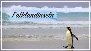 Antarktis vlog #3 - pinguine & plastikmüll am ende der welt