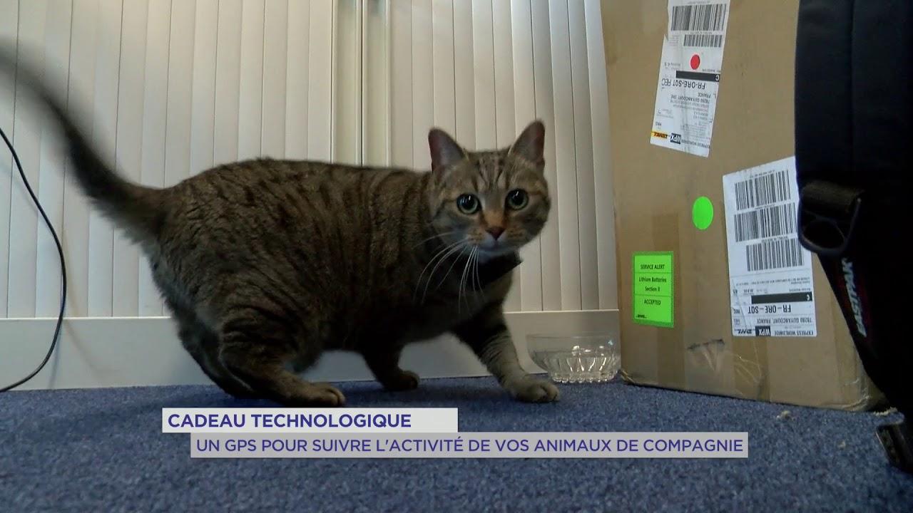 yvelines-cadeau-technologique-un-gps-pour-suivre-lactivite-de-vos-animaux-de-compagnie