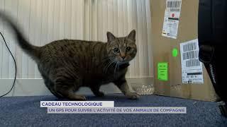 Yvelines | Cadeau technologique : un GPS pour suivre l'activité de vos animaux de compagnie