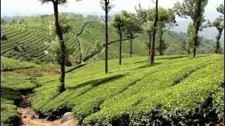 India - Munnar - February 2012 - Tea Plantations