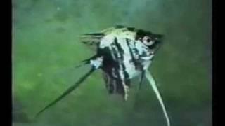 аквариум, болезни рыбок. Часть 3