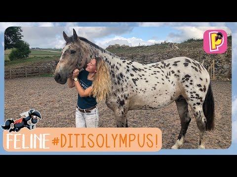 Dit is Olympus!   Feline   PennyTV