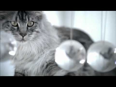 Vidéo Purina One - Voix-off Stephan Kalb