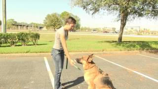 How To Train And Care For A German Shepherd Dog