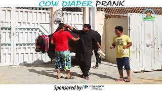 | COW DIAPER PRANK | By Nadir Ali In | P4 Pakao | 2017