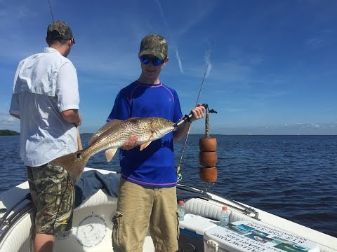 How to Catch Fish - Dead Low Tide Tampa Bay Fishing Guide 813-758-3406