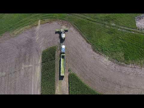 chopping corn 2017
