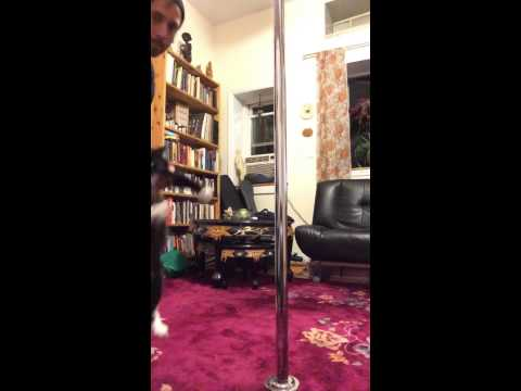 James Bond Cat Pole Dance