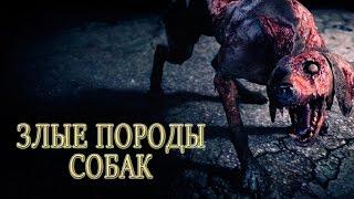 Cамые опасные собаки в мире