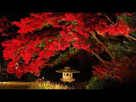 【Autumn leaves】RIKUGIEN 2018 六義園. #4K #六義園紅葉ライトアップ