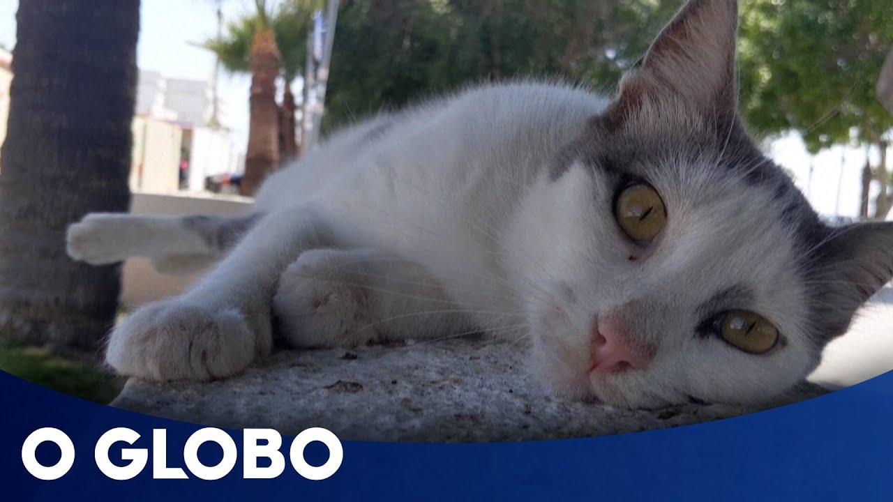 Brasil registra primeiro caso confirmado de Covid 19 em gatos