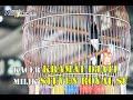 Kacer Mewah Gaya Mantap Kramat Djati Milik Om Steven Royal Sf  Mp3 - Mp4 Download